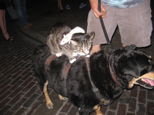 cat, dog, mouse