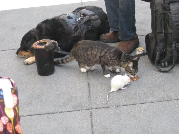cat,dog,mouse
