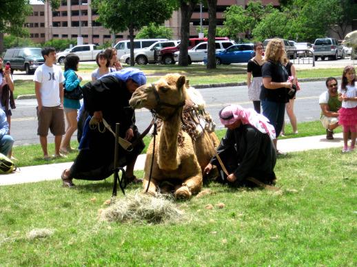 Camel? Camel!