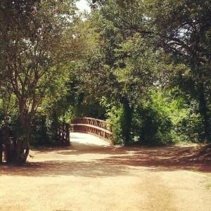 A Walk with Treavor